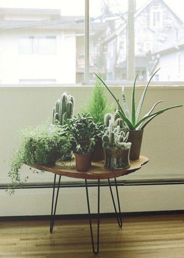 Accumuler les petites plantes