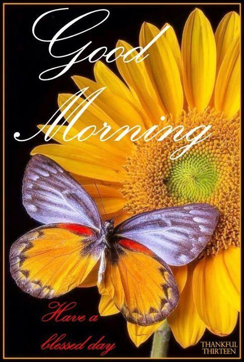 Good Morning Have A Blessed Sunday...