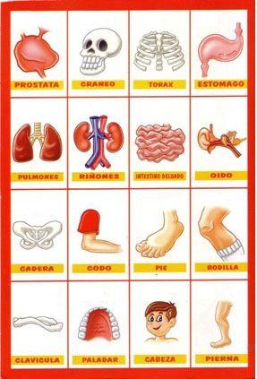 Nombres del Cuerpo