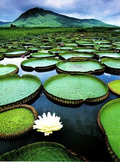 The Pantanal Conservation Area - Brazil's ultimate wildlife-watching experience