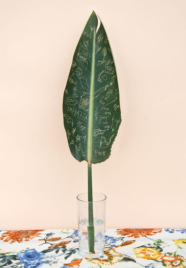 Botânica maníaca