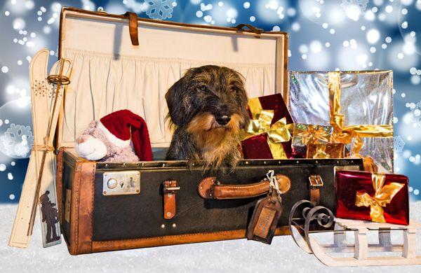 Grazie all'esperienza e al buon senso è possibile avere la valigia perfetta: ecco 5 regole d'oro per partire senza stress. http://www.sfilate.it/238843/le-5-regole-per-la-valigia-perfetta-per-le-vacanze-di-natale-o-di-capodanno