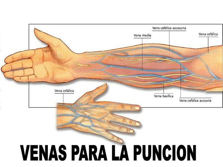 Encantador Anatomía De Una Muñeca Componente - Anatomía de Las ...