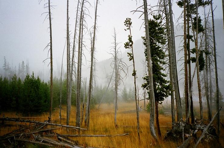 Jeff LukerLuker Photography, Favorite Things, Favorite Places, Wild Things, Jeff Luker, Trees Fog, Pretty Places, Favorite Photography, Jeffa Lukera