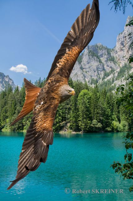 Beautiful hawk soaring over the lakes and mountains                                                                                                                                                      More