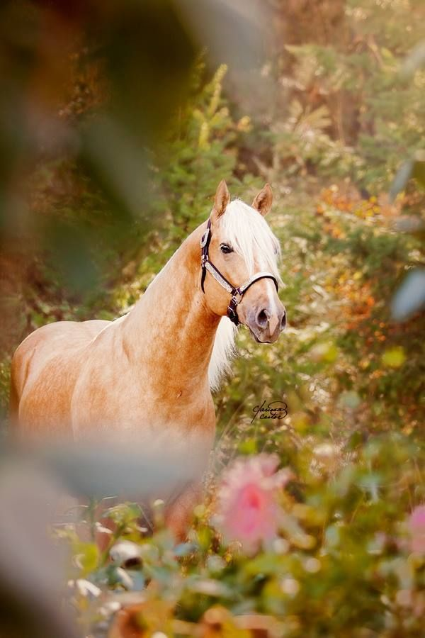 The Southern Playboy, Quarter Horse stallion.