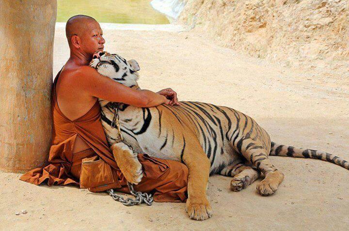 Man + Tiger = LOVE