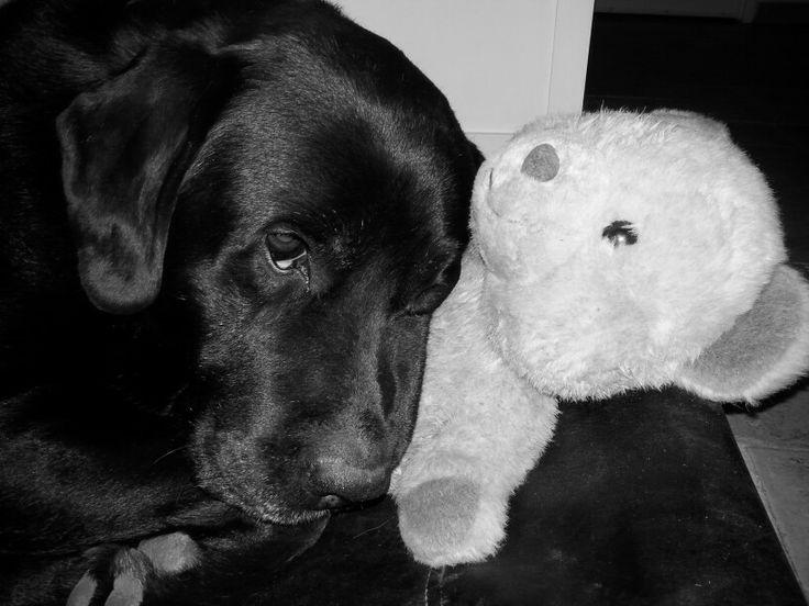 My black labrador sleeping with my lovely bear