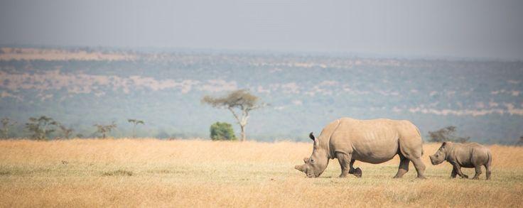 Completing the Big 5 at Ol Pejeta Mt Kenya