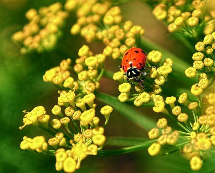 17 meilleures images propos de plantes vertes et fleurs - Anti puceron naturel ...