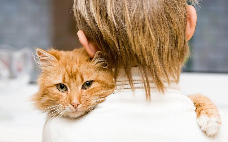 Часто можно наблюдать, как котик переминает лапами, слегка выпуская когти, и мурлычет при этом. Такие движения напоминают ему времена детства, когда он мял лапками живот своей мамы и сосал молоко, и означают высшее блаженство и счастье. Устроившись на коленях хозяина, животное впадает в детство. Ни в коем случае не стоит прогонять его. Это момент большой любви и ласки, и поведение хозяина, сердито прогоняющего его с колен, для него необъяснимо.  Пытаясь обнять хозяина, питомец демонстрирует…