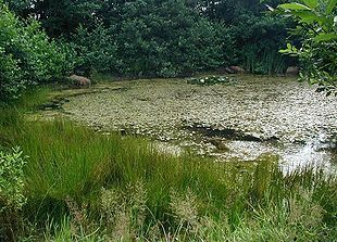Et vandhul er en lavning i jordoverfladen, der er vedvarende dækket af vand.   Næringsrig sø. Næringsrige søer og vandhuller med flydeplanter eller store vandaks. Denne naturtype, der også kaldes en eutrof sø, findes overalt i kulturlandskabet. Vegetationen er afhængig af den forholdsvist høje koncentration af mineralsk gødning, som den får tilført via dræn og overfladevand fra de dyrkede marker. Vandet vil ofte være klart i forårsmånederne, men i takt med, at nedbrydningshastigheden øges…