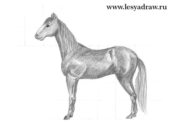 Wenn Sie ein Pferd selber zeichnen wollen, dann sind Sie genau richtig gekommen. Hier finden Sie eine Anleitung dafür. Schaue Sie mal...