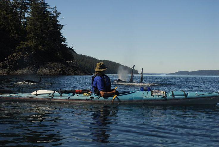 Spirit of the West Kayaking, Johnstone Strait, British Columbia
