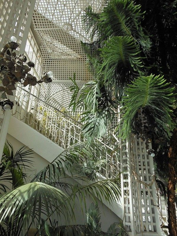 ღღ Jardins d'hiver entre ombre et lumière, Albert Kahn in Paris
