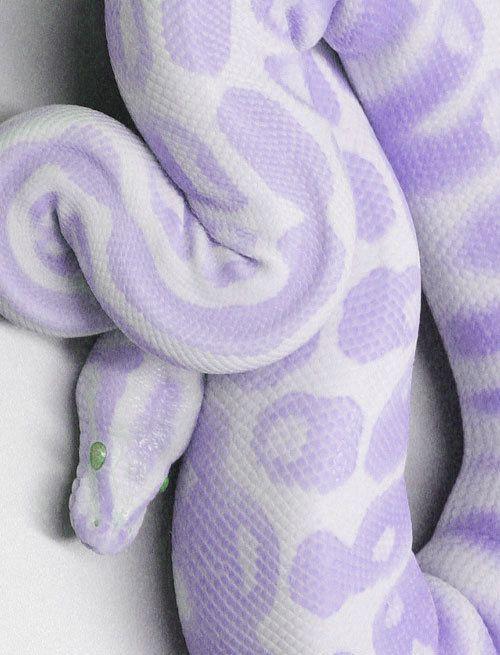 Python? Boa? Anaconda?! aw hell, I'll just name it barney snake....