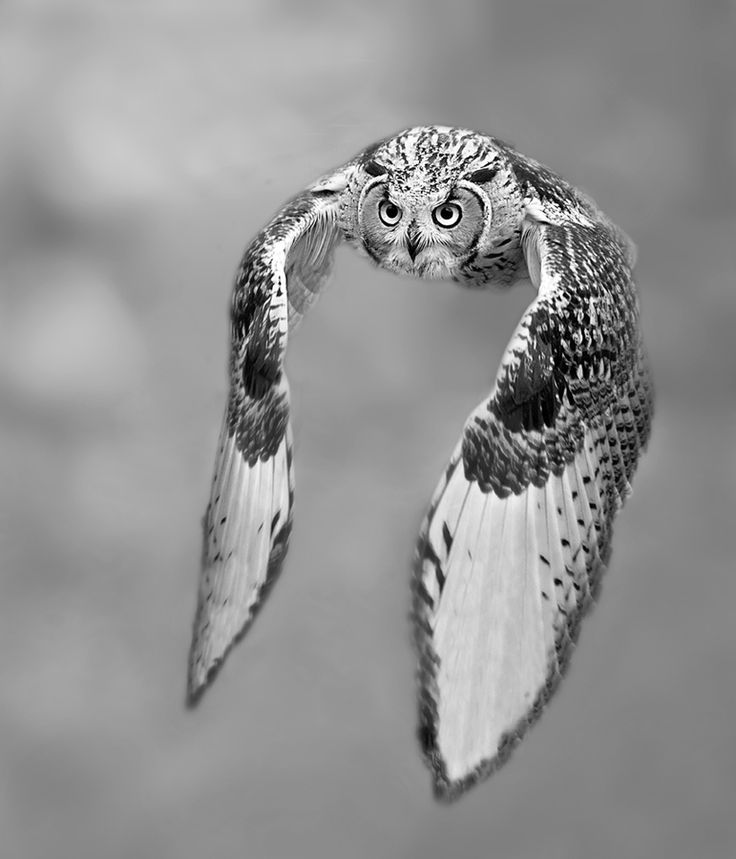 experimenting with black and white by Stefano Ronchi, via 500px