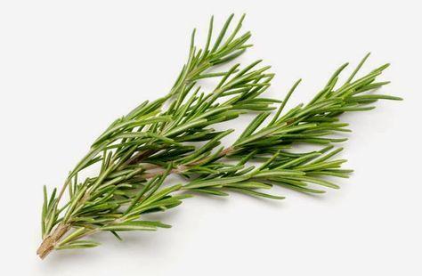 Elixir de alecrim e sálvia é excelente para memória e cansaço mental | Cura pela Natureza.com.br