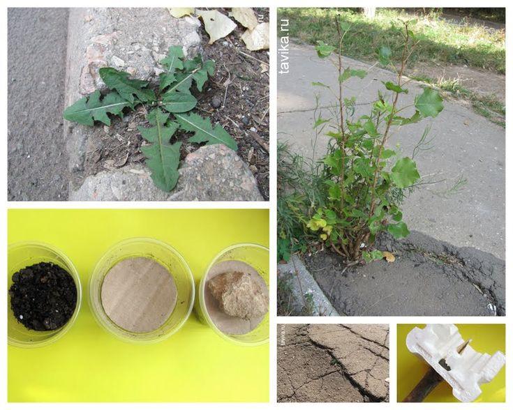 Как растения пробиваются через асфальт? Занятие для детей по ботанике