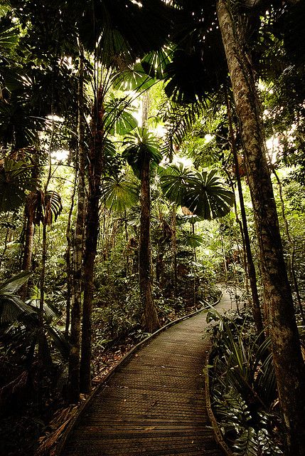 The Dubuji Boardwalk takes the visitor through stands of rainforest palms before exiting at Myall Beach, Cape Tribulation, Far North Queensland.