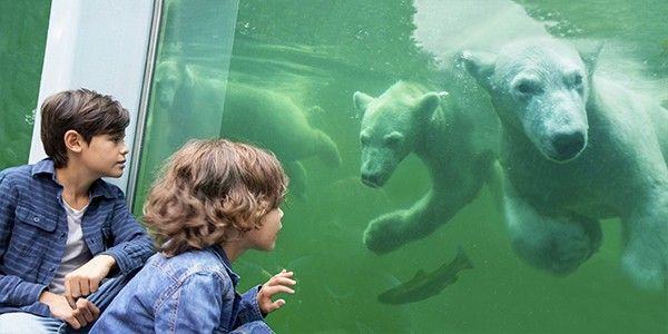 IJsberen Ouwehands Dierenparkbew
