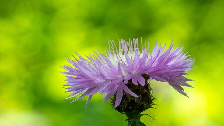 fragile - flower