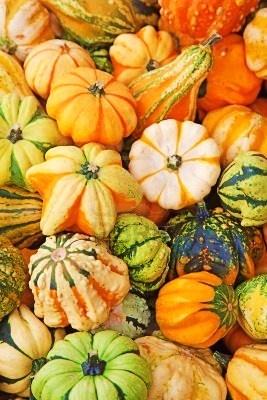 i love gourds