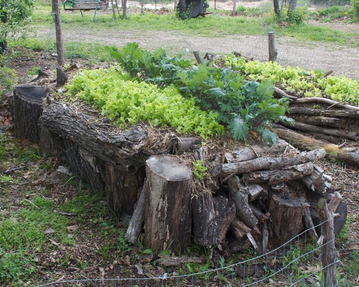 The 431 Best Images About Growing Food On Pinterest