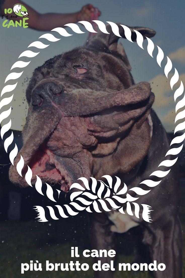 Martha è stata eletta il cane più brutto del mondo