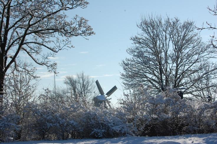 De molen door de besneeuwde takken heen