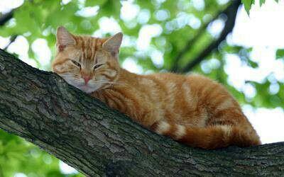Kočka na stromně
