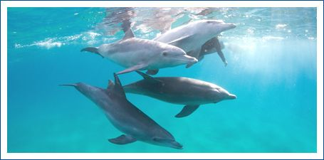 Join the incredible world of the Dolphin Centre in Ponta do Ouro, Mozambique.  Website designed and hosted by www.gardenrouteonline.co.za