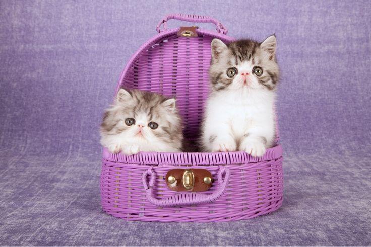 Günaydın :) Sevdiklerinizle geçireceğiniz güzel bir gün olması dileğiyle… www.madamecoco.com