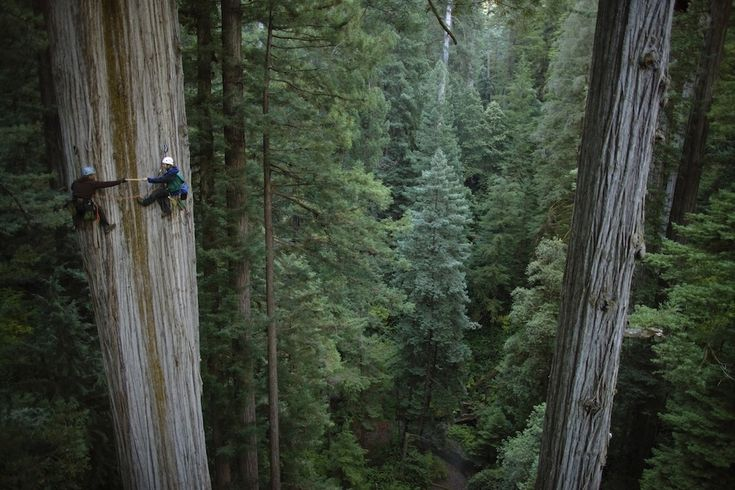 750-year-old sequoia: Sequoia National Park, California | The World's Most Beautiful Trees