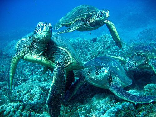 Sea turtles under the Sea...