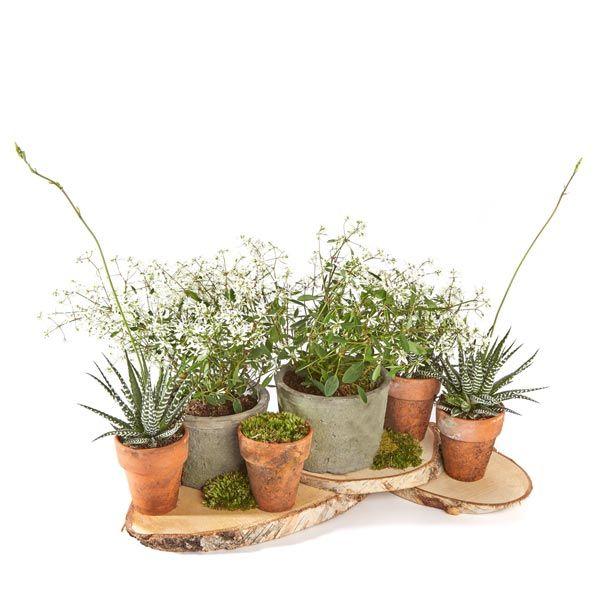 Potten & Planten.  Velen van u bezoeken met regelmaat een graf of een herdenkingsplaats van uw overleden dierbaren. Het is dan niet ongebruikelijk om bloemen of planten te plaatsen. Gemaakt door Afscheid met Bloemen.