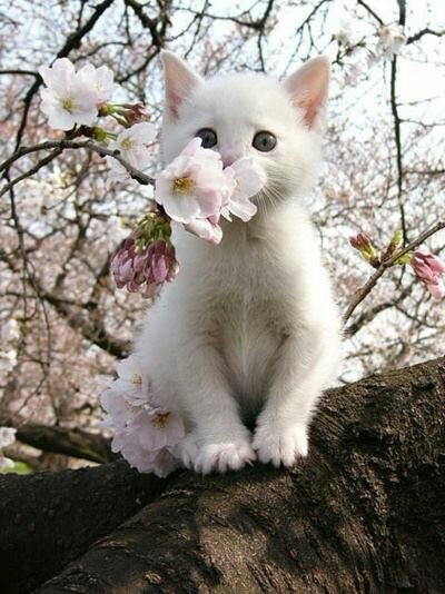 Everyone enjoys a good smelling blossom in the spring