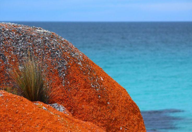 places to visit in tasmania binalong bay the gardens 01