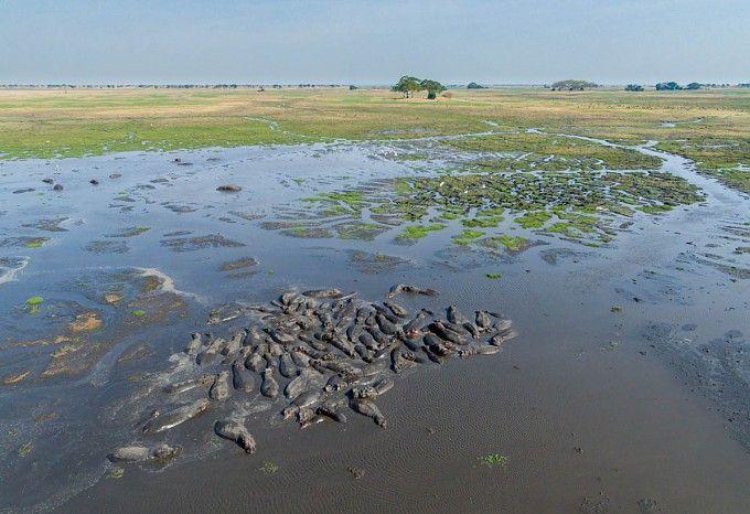 Hippo pod at Busanga Bush Camp
