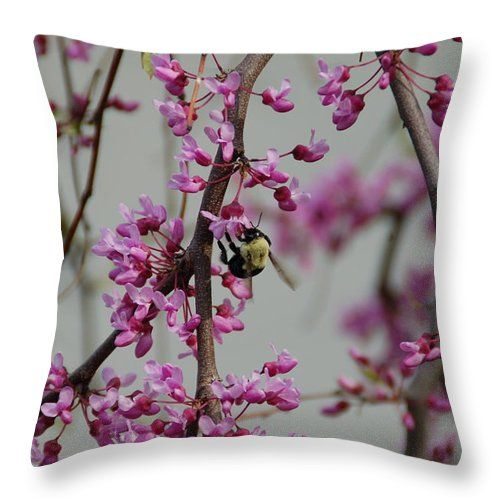 """Natures View Throw Pillow for Sale by Aimee L Maher Photography and Art Visit ALMGallerydotcom. Our throw pillows are made from 100% spun polyester poplin fabric and add a stylish statement to any room. Pillows are available in sizes from 14""""x14"""" up to 26""""x26"""". Each pillow is printed on both sides (same image) and includes a concealed zipper and removable insert (if selected) for easy cleaning. Ships within 2-3 business days"""