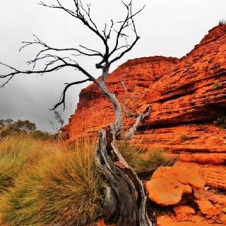 #Australian Outback    http://wp.me/p291tj-8E