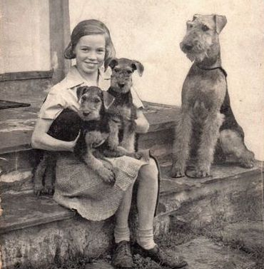 c. 1947. These dogs slipped in popularity and I can't understand why.  They are fun, smart, beautiful, and loyal to a fault.