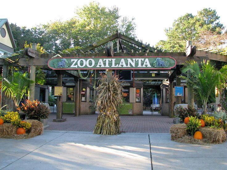 Zoo atlanta is a very beautiful zoo and a favorite tourist destination worldwide.