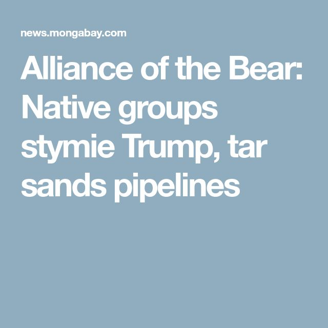 Alliance of the Bear: Native groups stymie Trump, tar sands pipelines