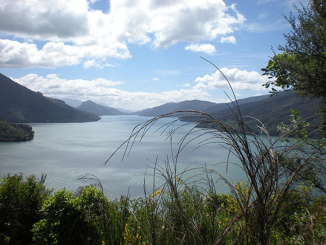 Scenic route >>> Nelson to Picton  South Island, NZ