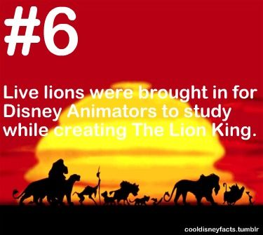 Cool Disney Facts: Live lions were brought in for Disney Animators to study while creating The Lion King