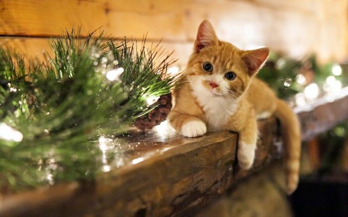 christmas cat wallpaper , HD Desktop Wallpapers