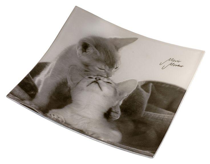 Piattino con gatti. http://www.recordit.com/