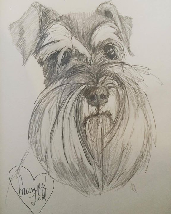 Schnauzer Drawing Easy: 102 Best Images About Schnauzer On Pinterest