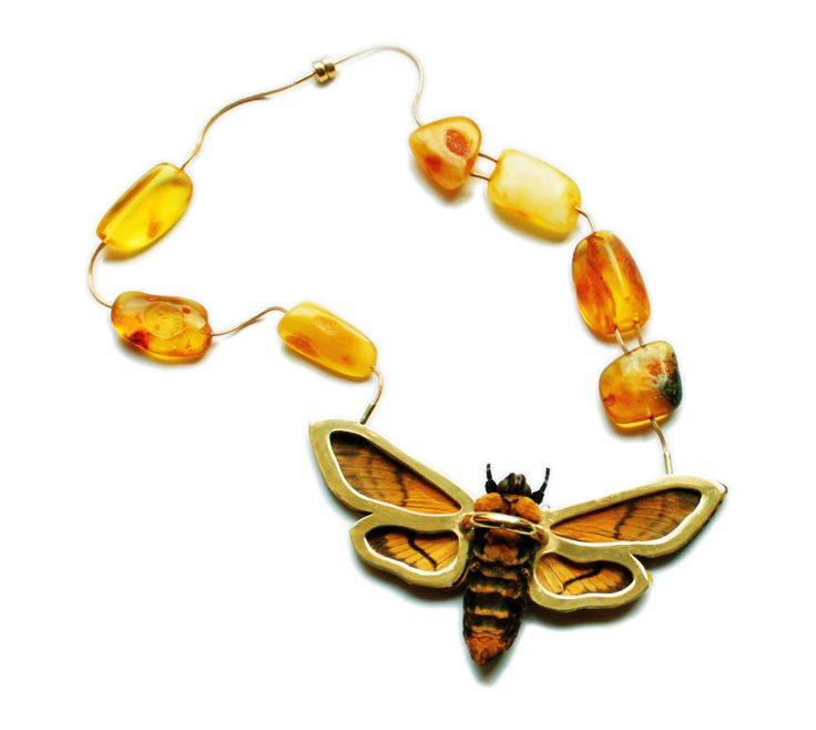 Justyna Stasiewicz - The amber moth